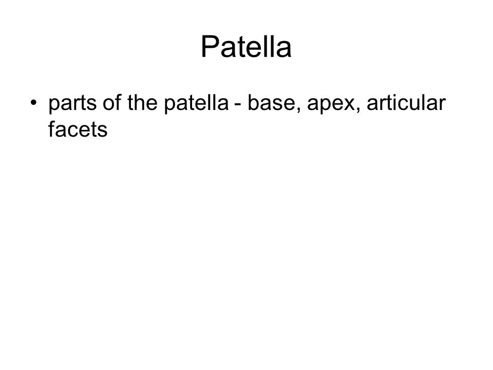 Patella parts of the patella - base, apex, articular facets