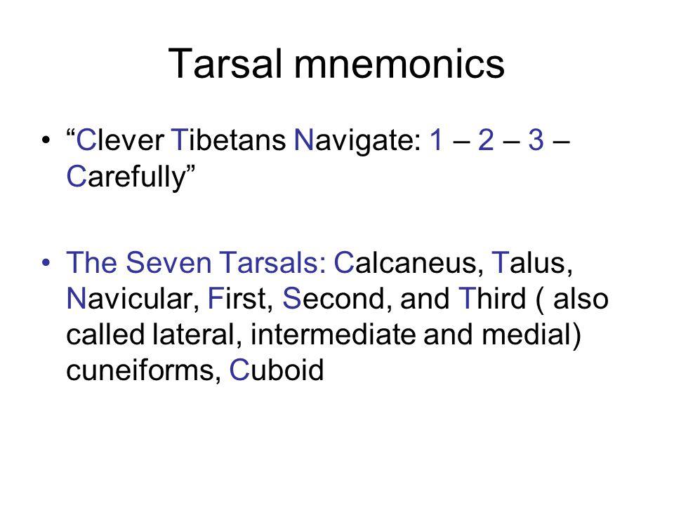 Tarsal mnemonics Clever Tibetans Navigate: 1 – 2 – 3 – Carefully