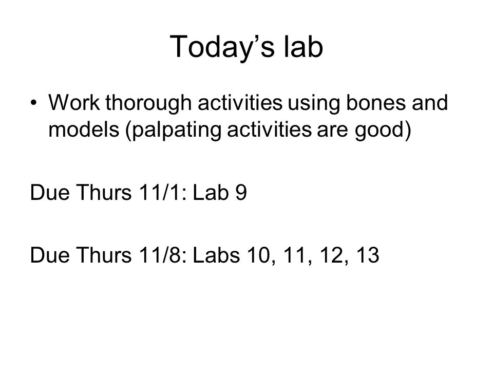 Today's lab Work thorough activities using bones and models (palpating activities are good) Due Thurs 11/1: Lab 9.