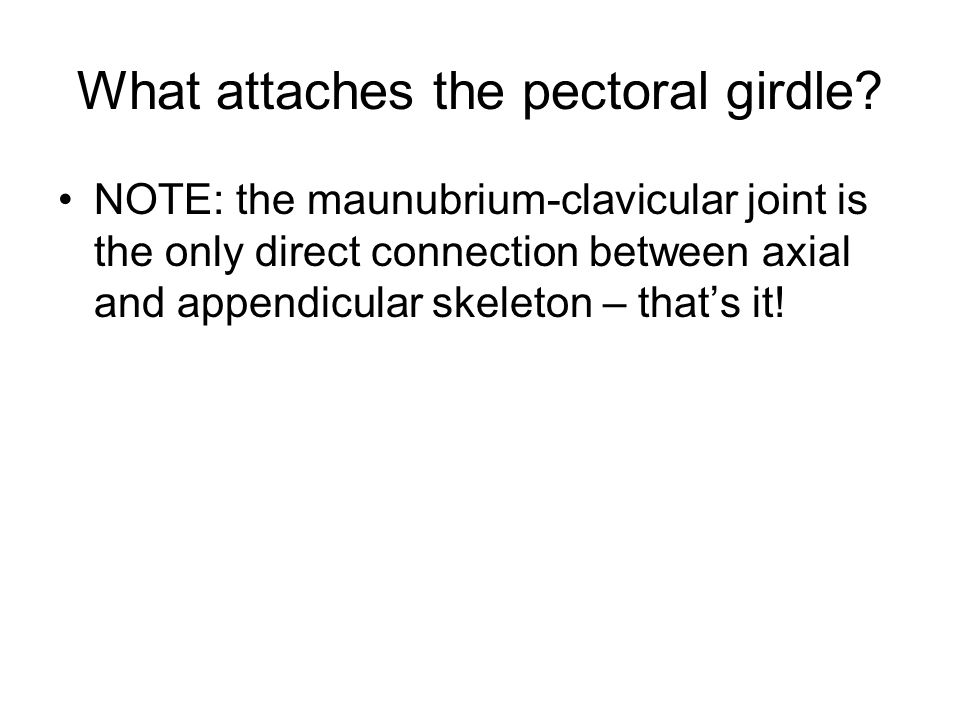 What attaches the pectoral girdle