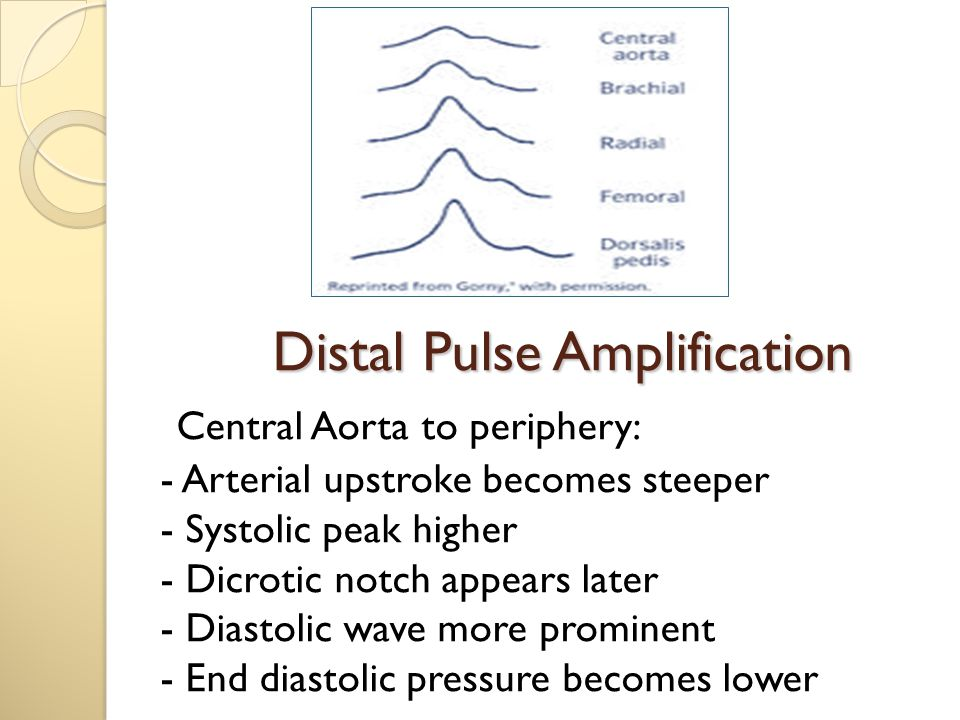 Distal Pulse Amplification Central Aorta to periphery: - Arterial upstroke becomes steeper - Systolic peak higher - Dicrotic notch appears later - Diastolic wave more prominent - End diastolic pressure becomes lower