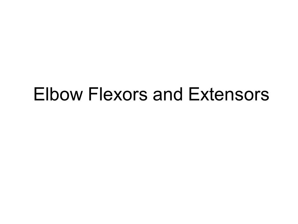 Elbow Flexors and Extensors