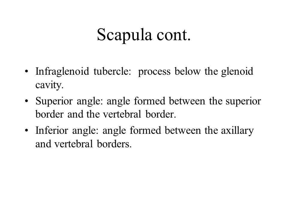 Scapula cont. Infraglenoid tubercle: process below the glenoid cavity.