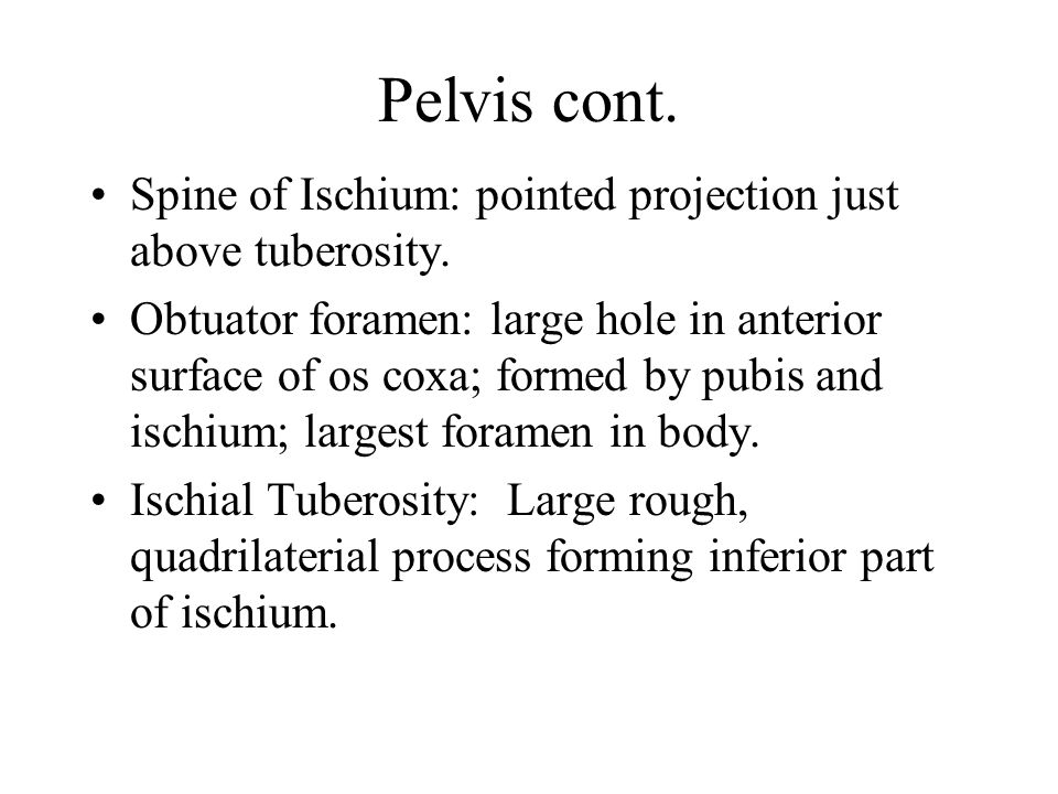 Pelvis cont. Spine of Ischium: pointed projection just above tuberosity.
