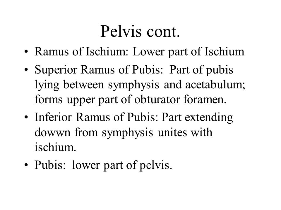 Pelvis cont. Ramus of Ischium: Lower part of Ischium