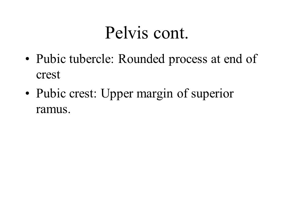 Pelvis cont. Pubic tubercle: Rounded process at end of crest
