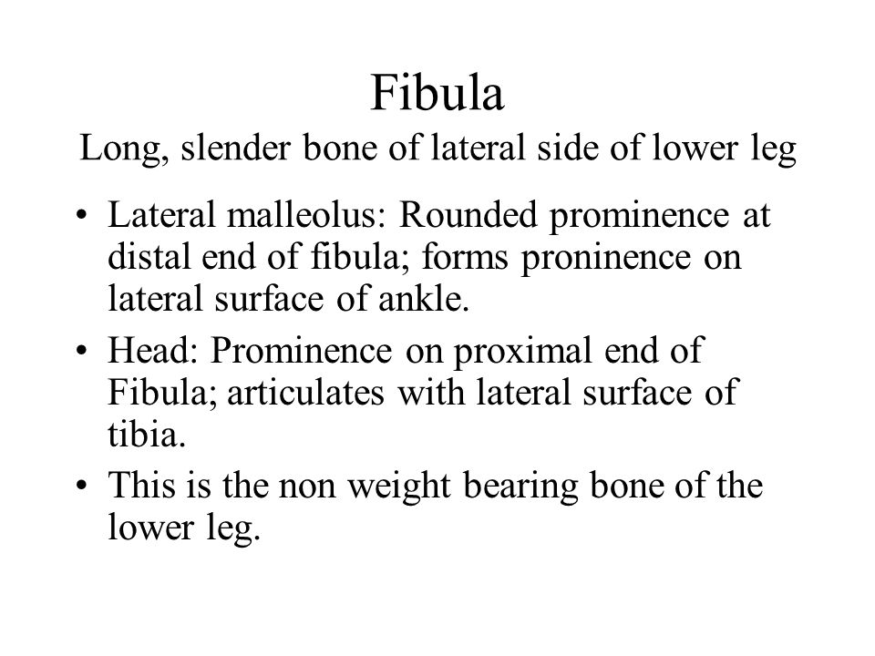 Fibula Long, slender bone of lateral side of lower leg