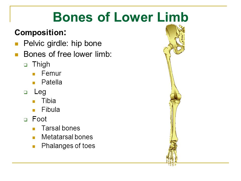Bones of Lower Limb Composition: Pelvic girdle: hip bone