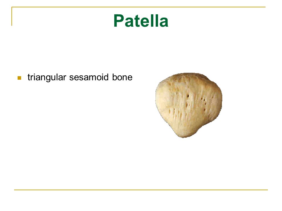 Patella triangular sesamoid bone