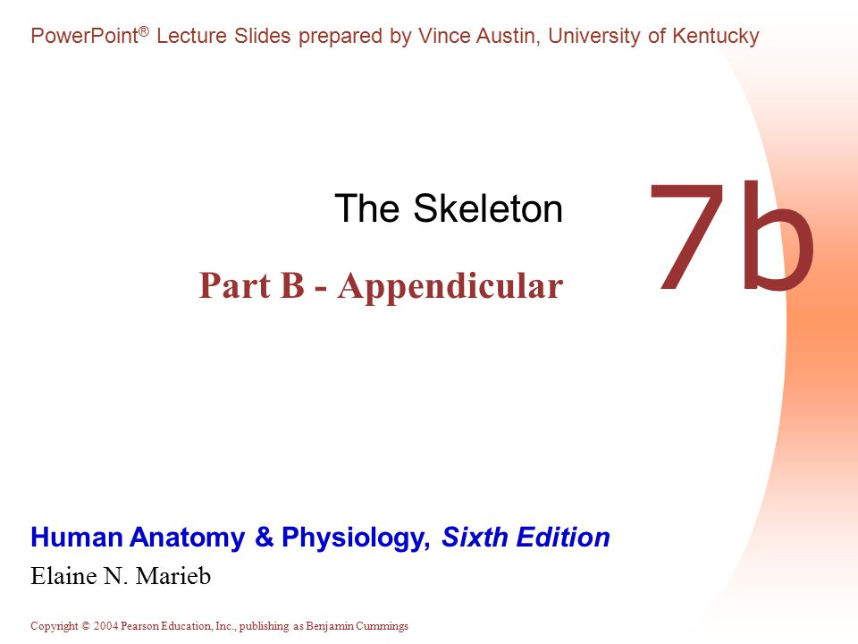 The Skeleton Part B - Appendicular
