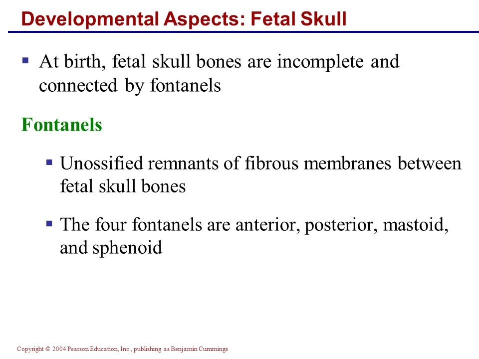 Developmental Aspects: Fetal Skull