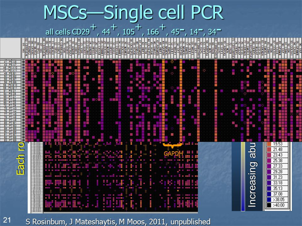 MSCs—Single cell PCR all cells CD29+, 44+, 105+, 166+, 45-, 14-, 34-