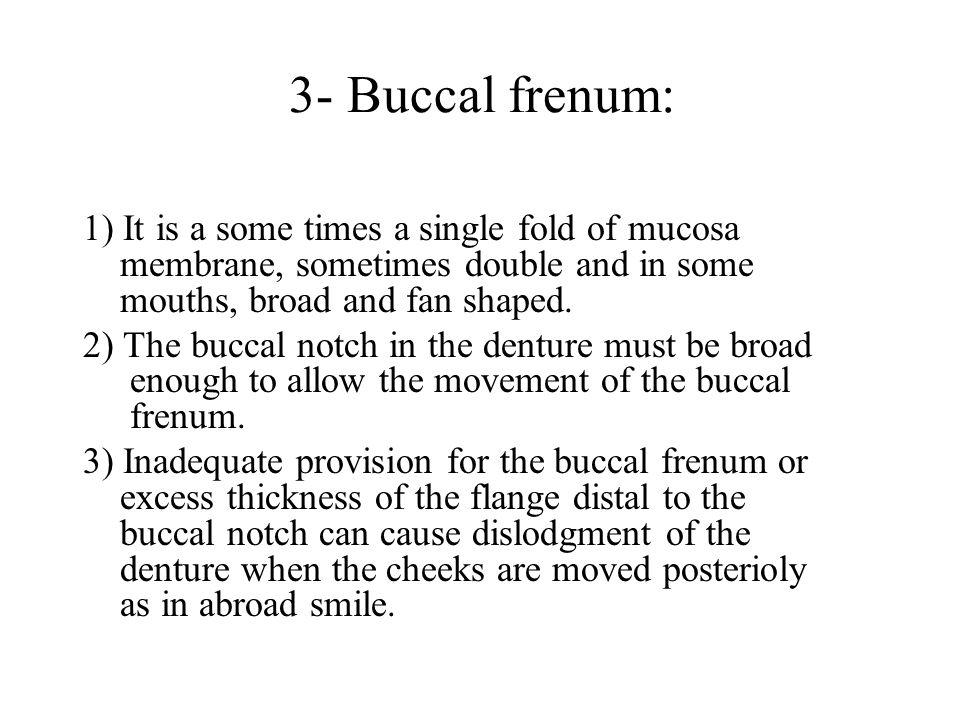 3- Buccal frenum: