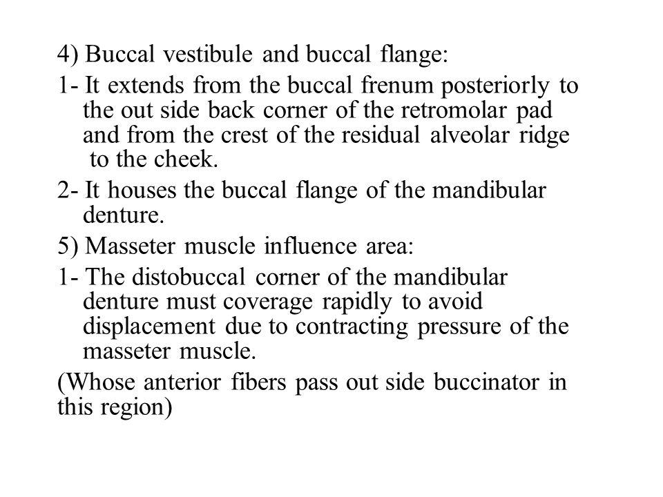 4) Buccal vestibule and buccal flange: