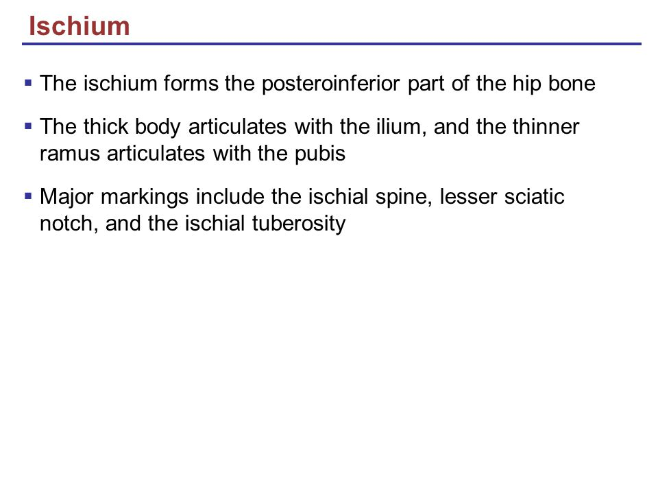 Ischium The ischium forms the posteroinferior part of the hip bone