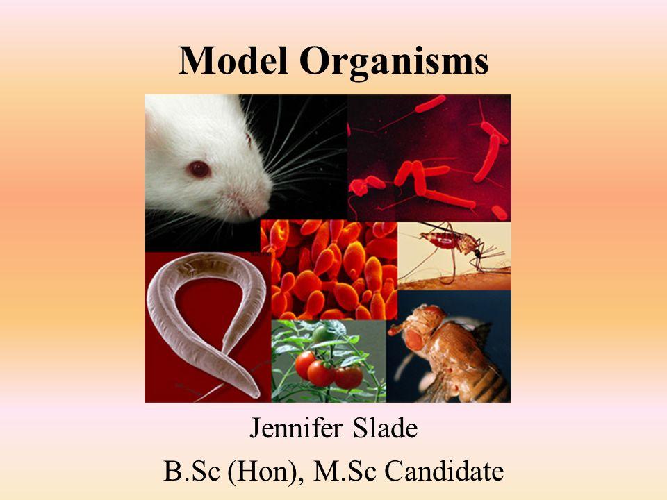 Jennifer Slade B.Sc (Hon), M.Sc Candidate