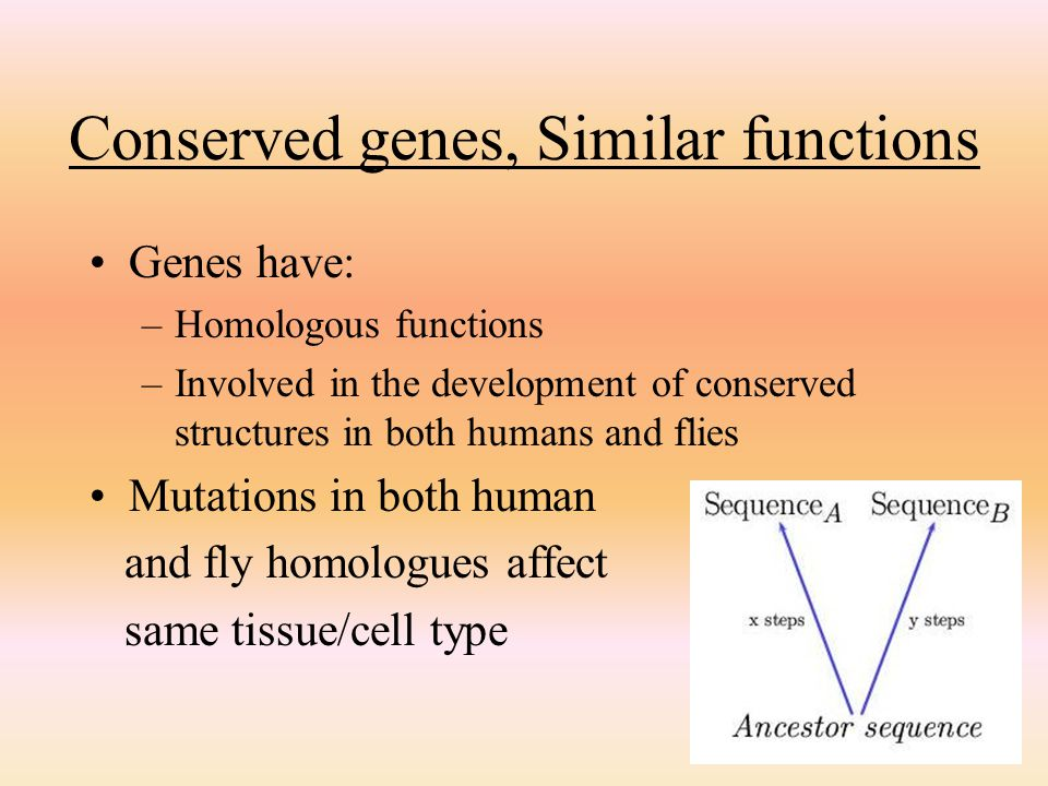 Conserved genes, Similar functions