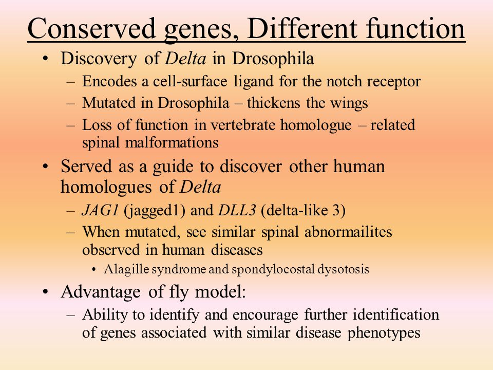 Conserved genes, Different function