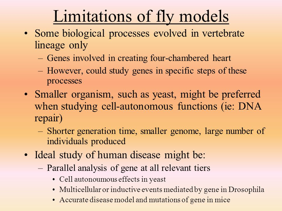 Limitations of fly models
