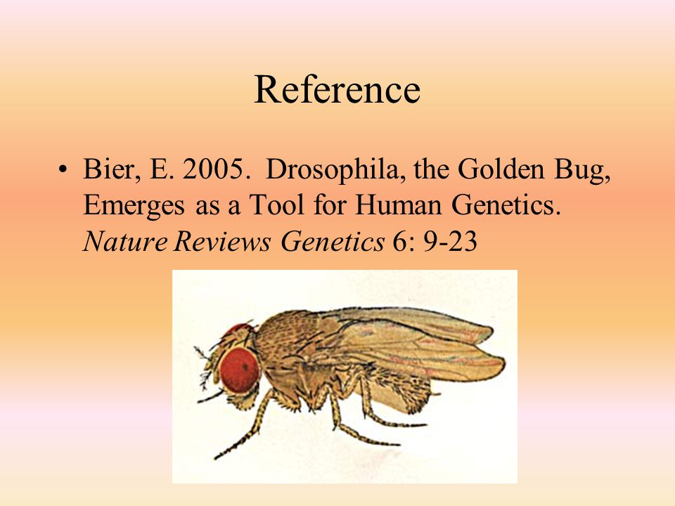 Reference Bier, E. 2005. Drosophila, the Golden Bug, Emerges as a Tool for Human Genetics.