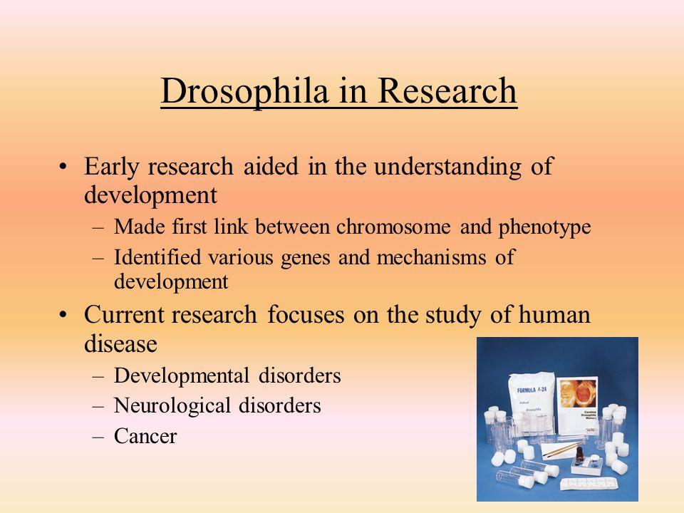 Drosophila in Research