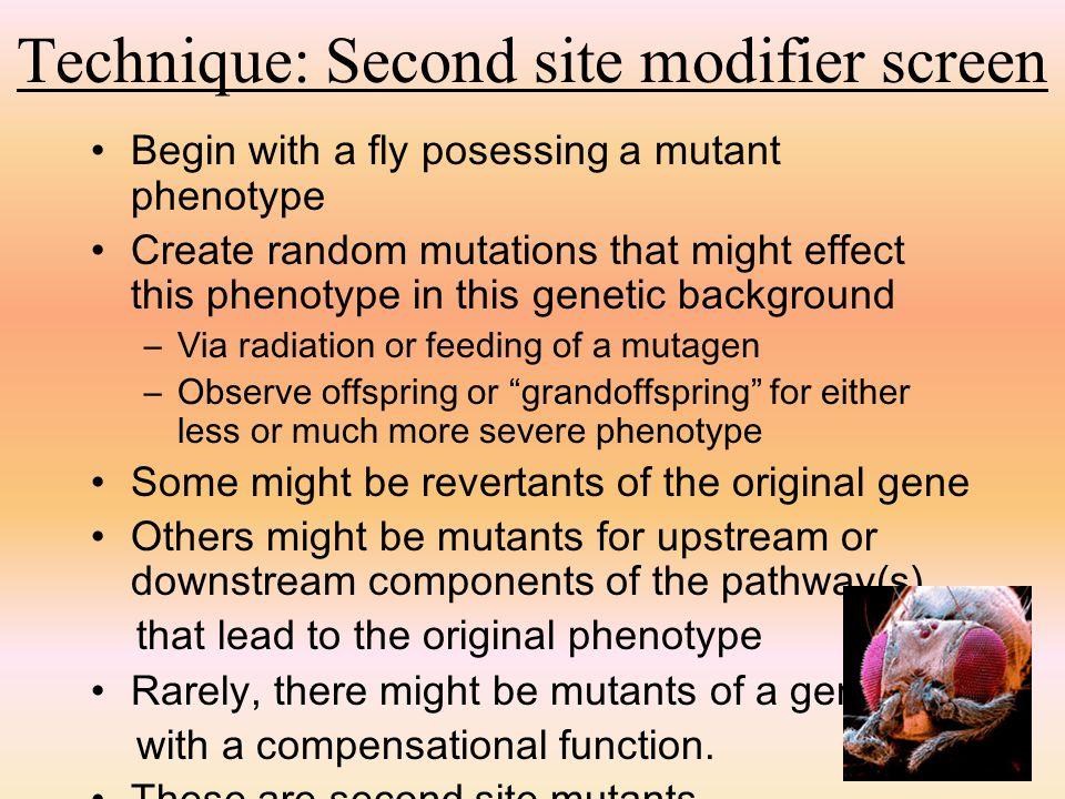 Technique: Second site modifier screen