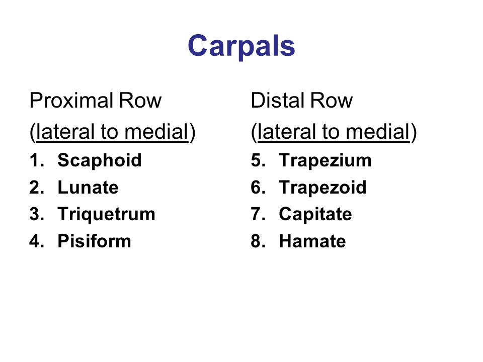 Carpals Proximal Row (lateral to medial) Distal Row