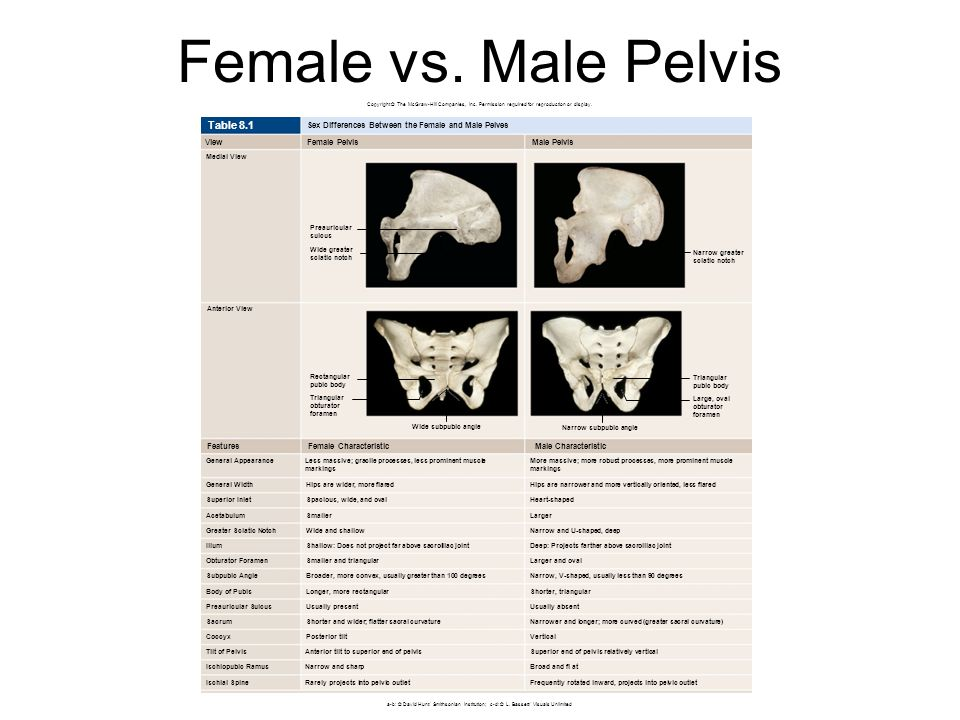 Female vs. Male Pelvis Table 8.1