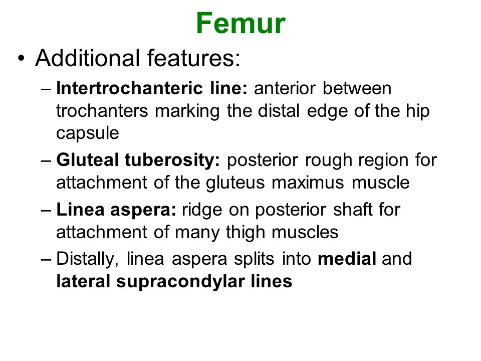 Femur Additional features: