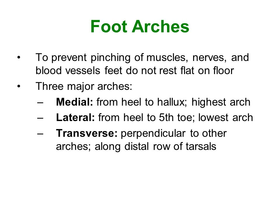 Foot Arches To prevent pinching of muscles, nerves, and blood vessels feet do not rest flat on floor.