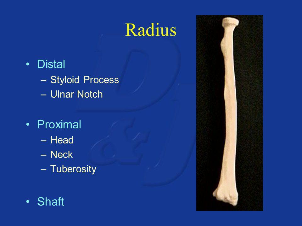 Radius Distal Proximal Shaft Styloid Process Ulnar Notch Head Neck
