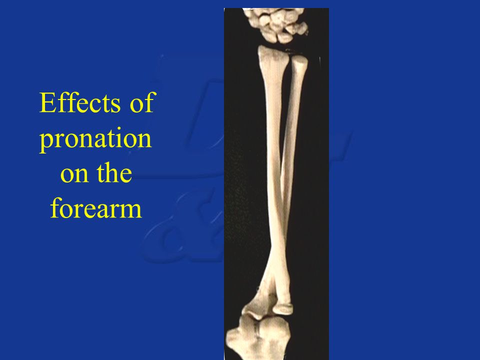 Effects of pronation on the forearm