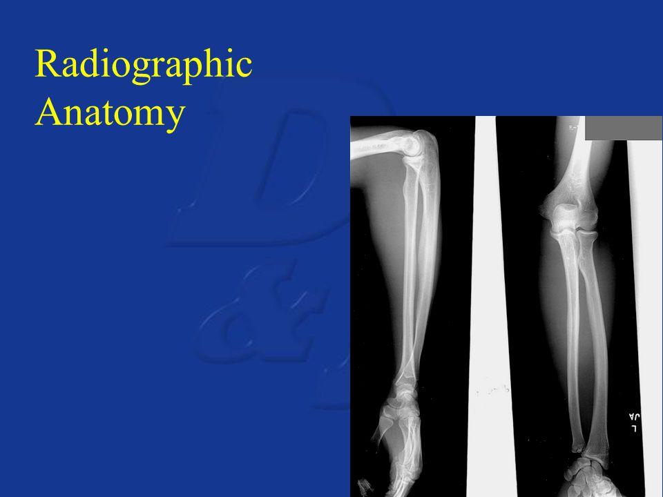 Radiographic Anatomy
