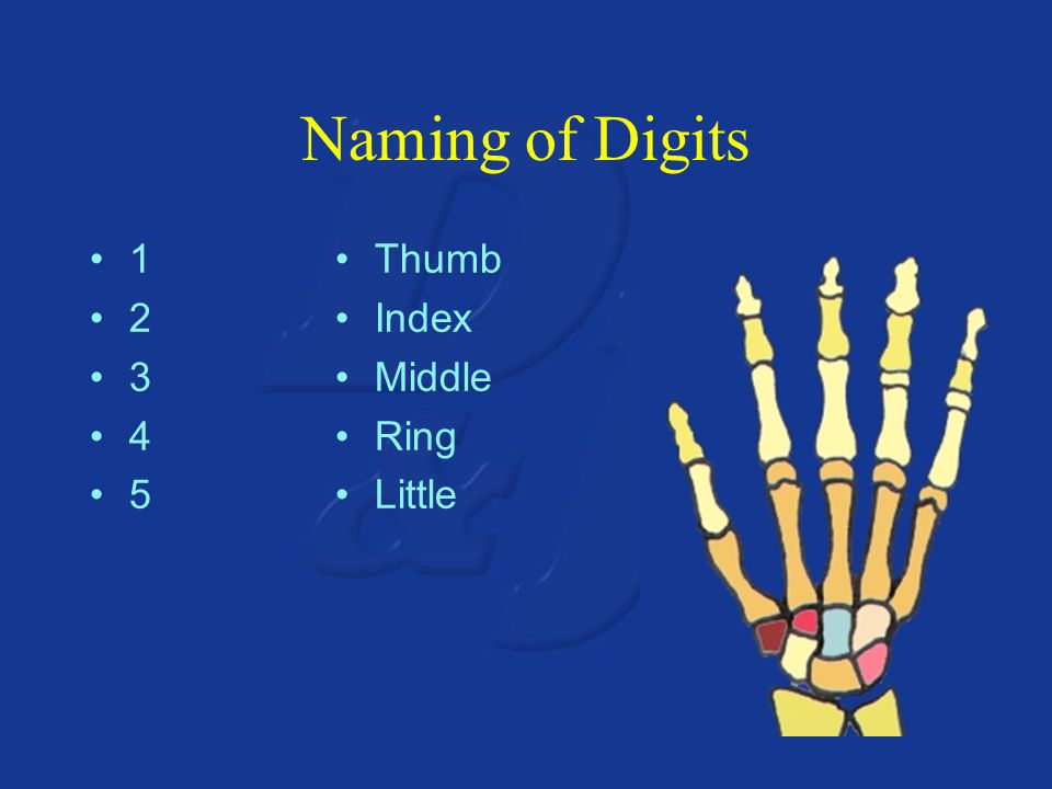 Naming of Digits 1 2 3 4 5 Thumb Index Middle Ring Little