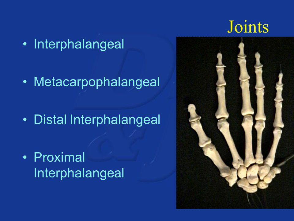 Joints Interphalangeal Metacarpophalangeal Distal Interphalangeal