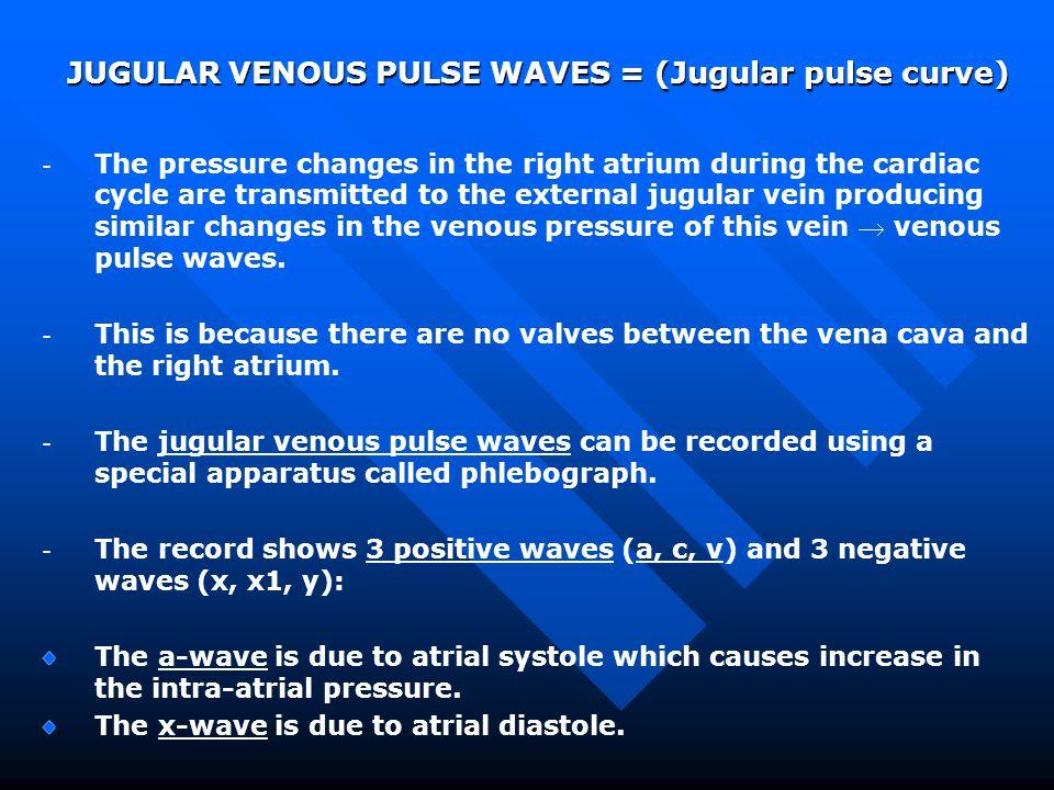 JUGULAR VENOUS PULSE WAVES = (Jugular pulse curve)