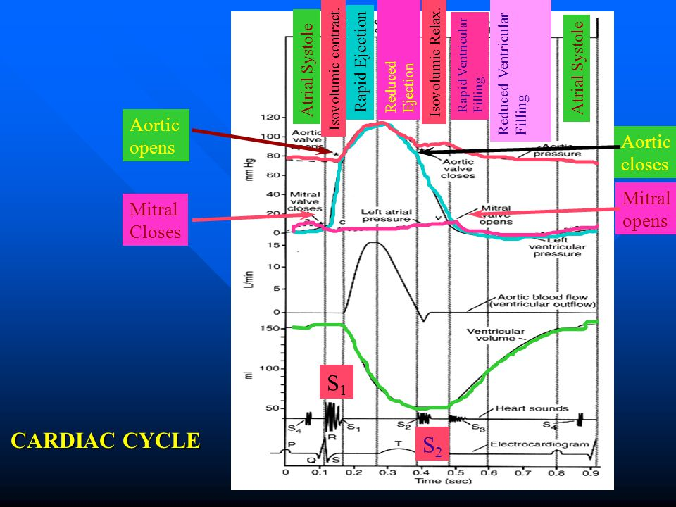 S1 CARDIAC CYCLE S2 Aortic opens Aortic closes Mitral opens Mitral