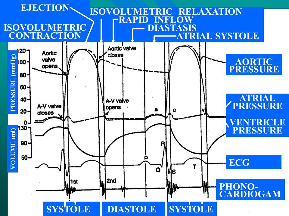 ISOVOLUMETRIC RELAXATION RAPID INFLOW DIASTASIS ATRIAL SYSTOLE