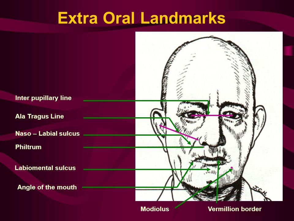 Extra Oral Landmarks Inter pupillary line Ala Tragus Line