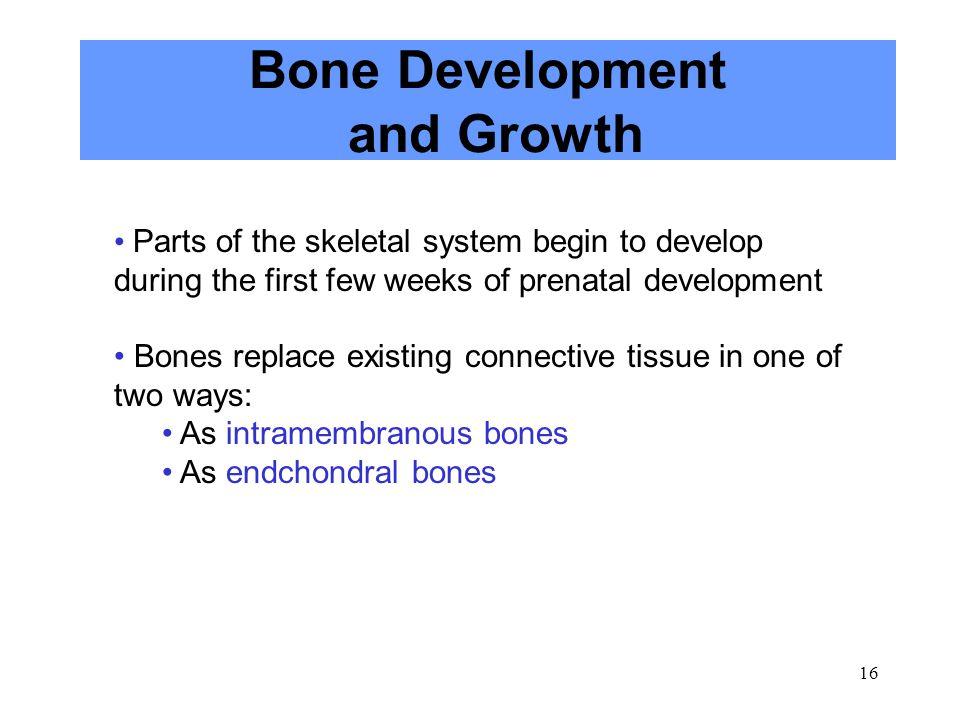 Bone Development and Growth
