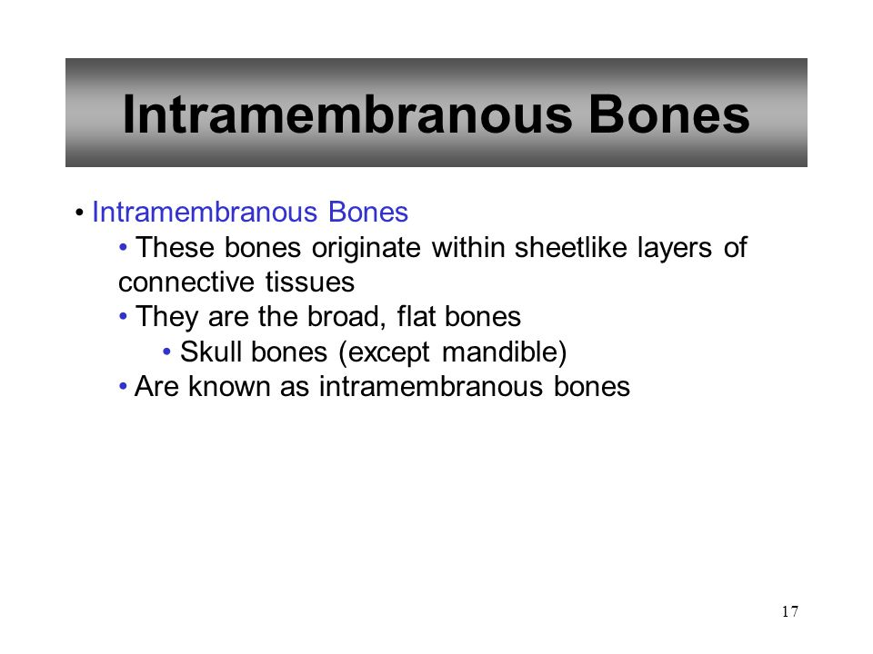 Intramembranous Bones