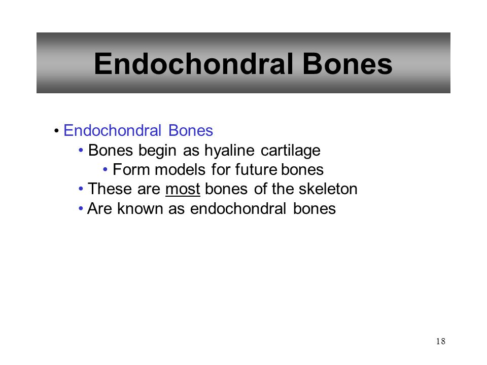 Endochondral Bones Endochondral Bones Bones begin as hyaline cartilage