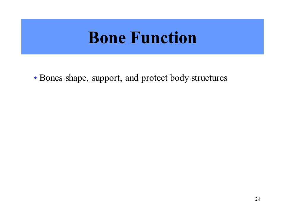 Bone Function Bones shape, support, and protect body structures