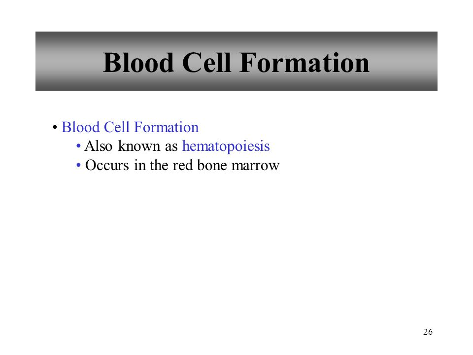 Blood Cell Formation Blood Cell Formation Also known as hematopoiesis