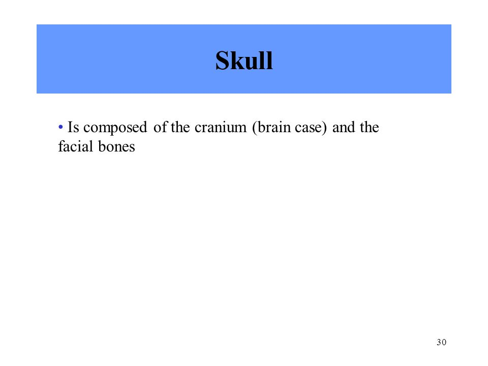 Skull Is composed of the cranium (brain case) and the facial bones