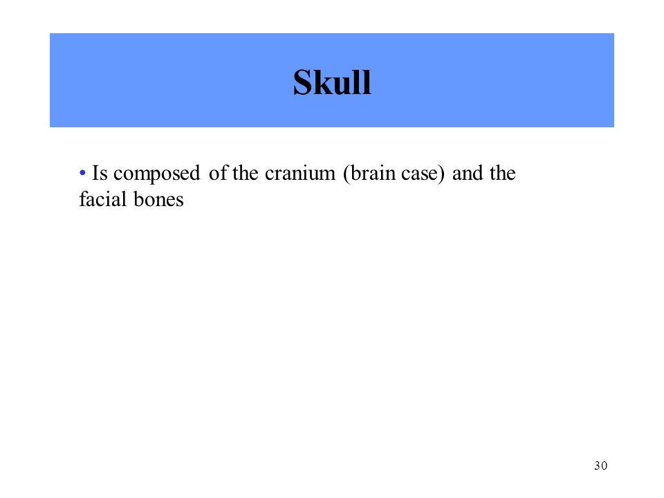 Skull Is composed of the cranium (brain case) and the facial bones