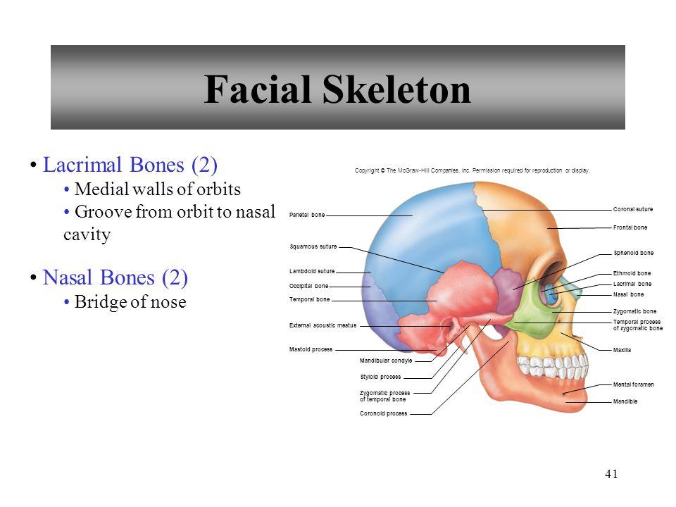Facial Skeleton Lacrimal Bones (2) Nasal Bones (2)