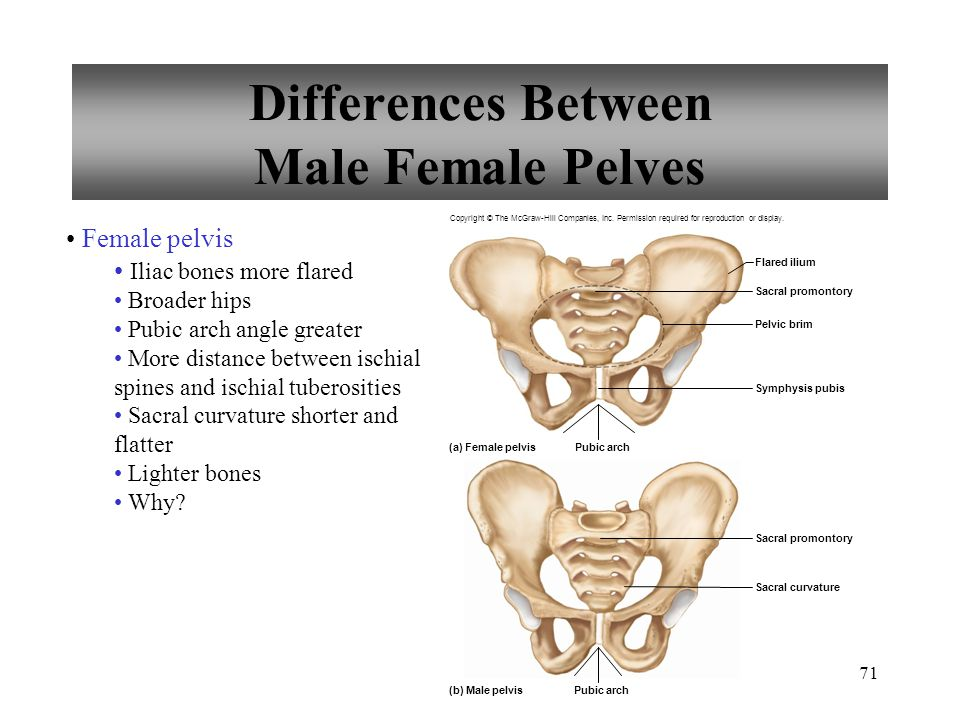 Differences Between Male Female Pelves