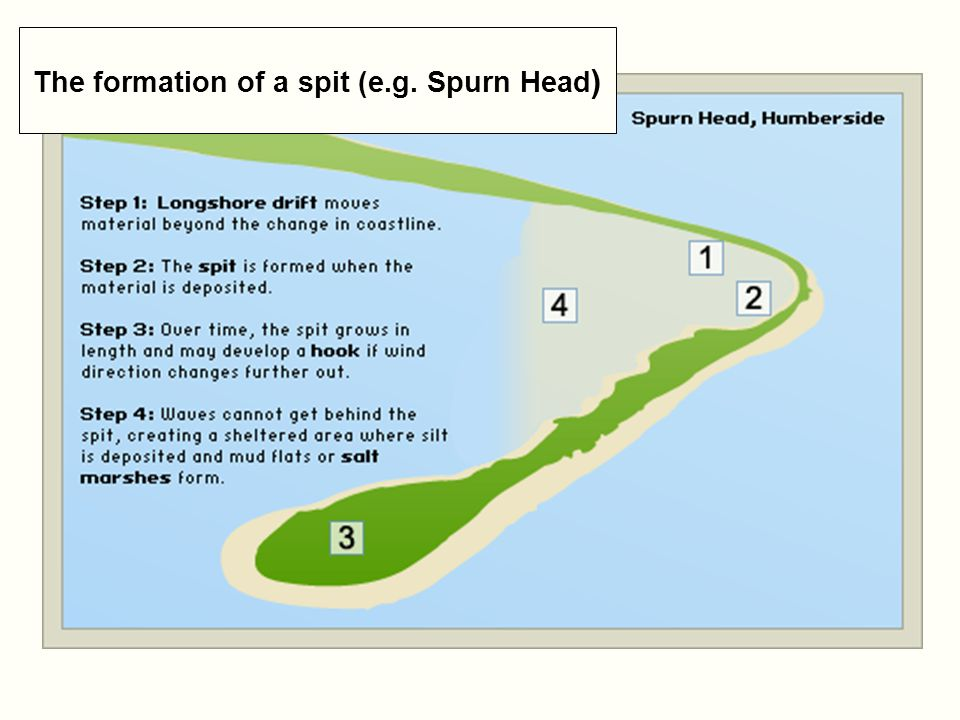 The formation of a spit (e.g. Spurn Head)