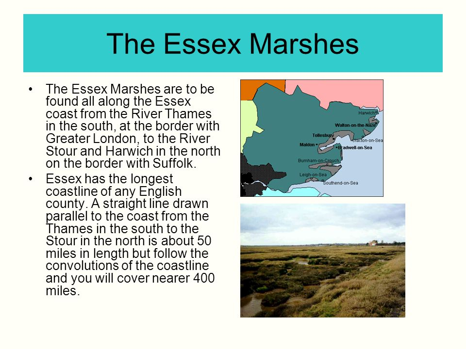 The Essex Marshes